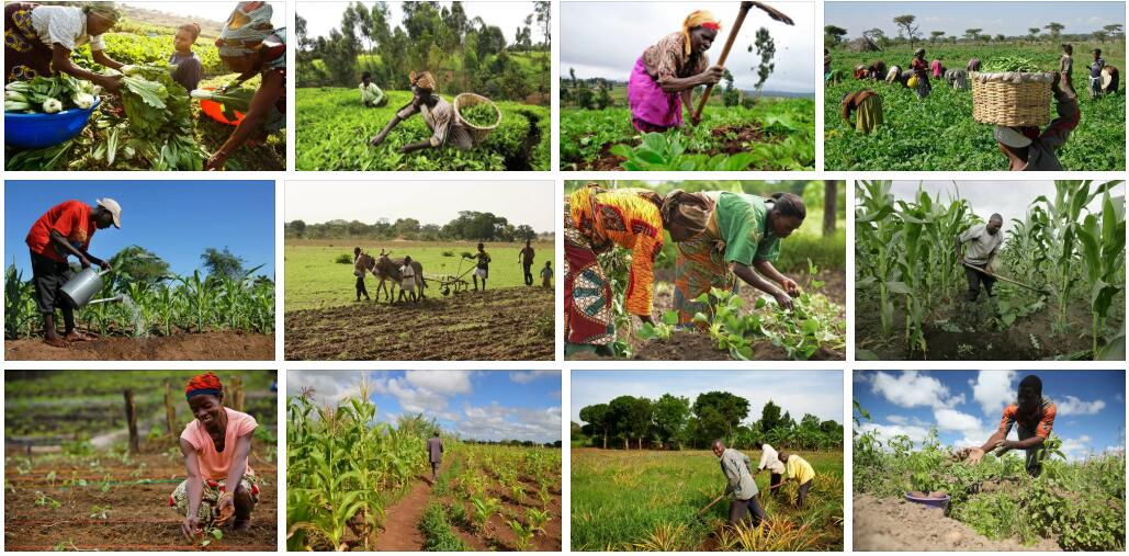 Africa Agriculture 2